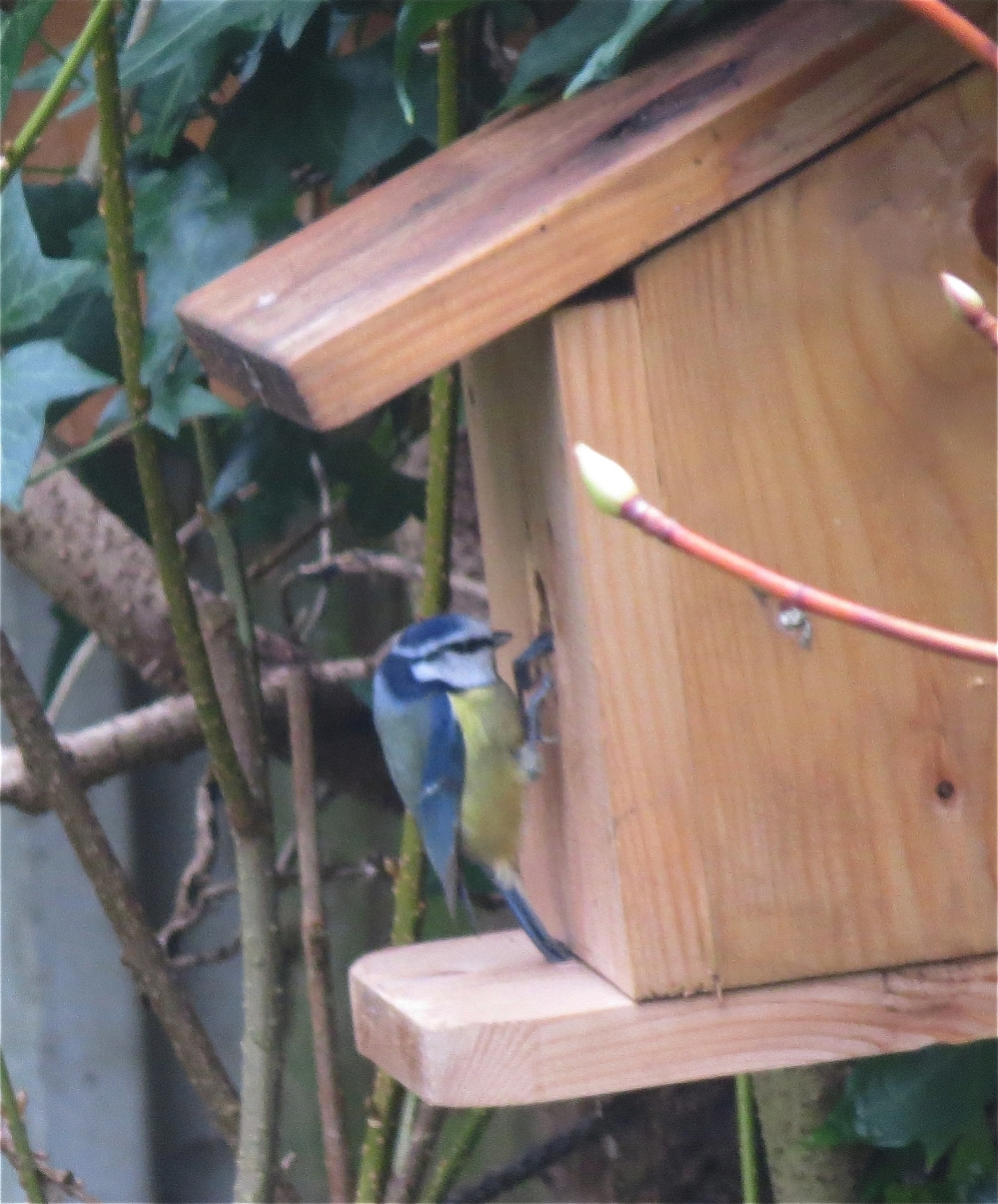 Bluetitonnestbox