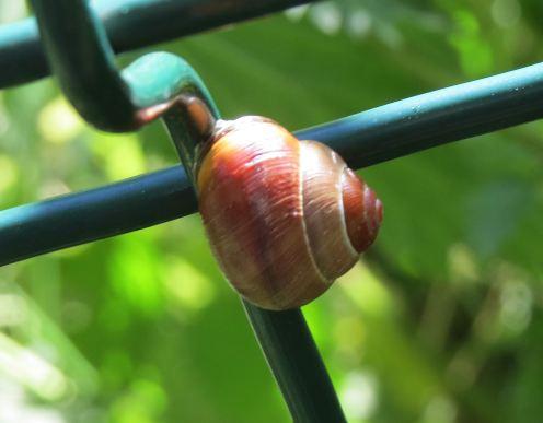 Snail01