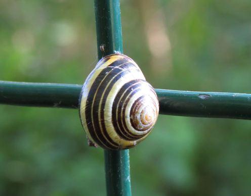 Snail02