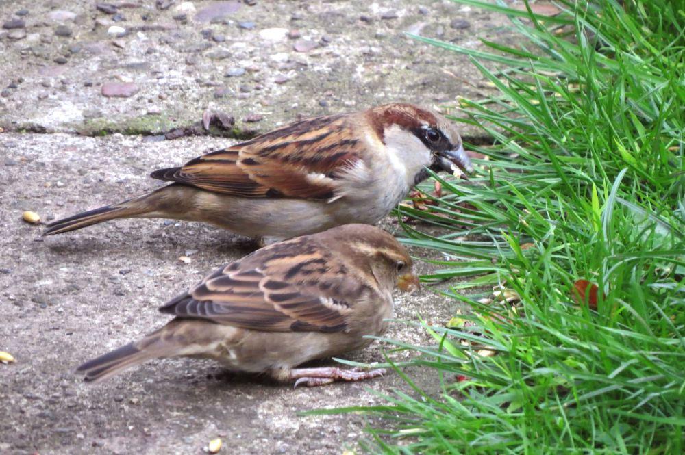 Sparrow24