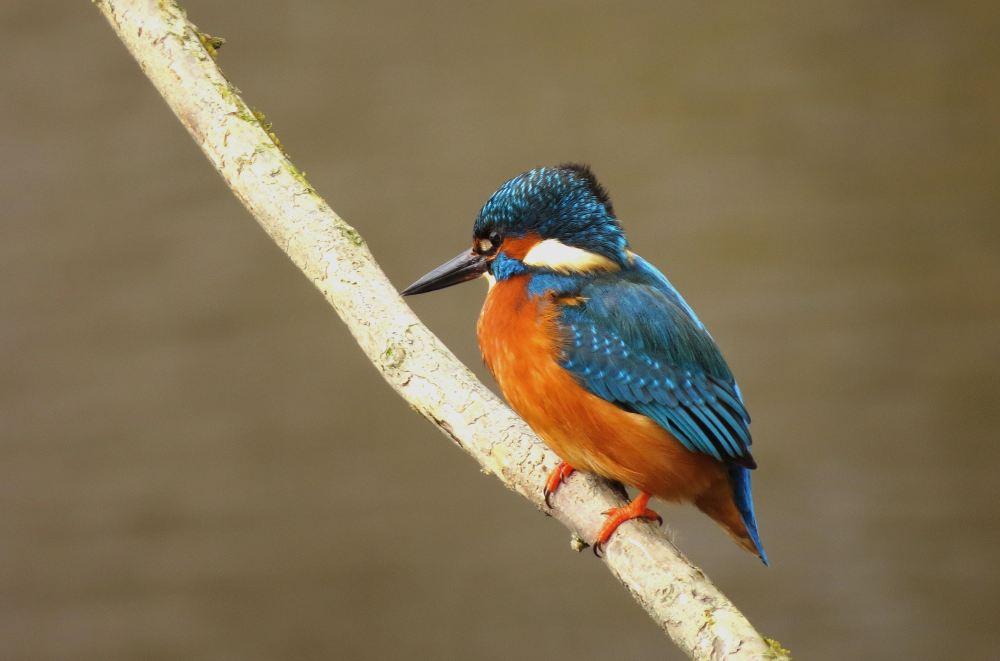 Kingfisher24